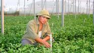 Nhà nông Nghệ An đầu tư lớn cho trồng hoa dịp Tết