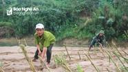 Cựu chiến binh ra quân trồng sậy chống sạt lở bờ sông Lam