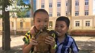 Bàn giao rùa núi viền cho Vườn Quốc gia Pù Mát