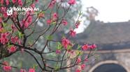 Nghệ An: Nhiều đền chùa vắng lặng đầu năm mới