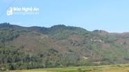 Đi cắt cây rành rành, một người đàn ông mất tích bí ẩn trên núi