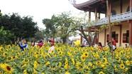 Tuyệt đẹp vườn hoa hướng dương rực rỡ đón Tết ở chùa Cổ Am