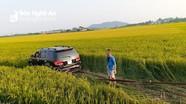 Mất lái, xe con lao xuống ruộng lúa