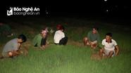 Nông dân Nghệ An 'đốt đèn' nhổ mạ, cấy lúa đêm để tránh nắng nóng