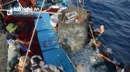 Nghệ An: Tập trung khắc phục thẻ vàng trong khai thác thủy sản của Ủy ban châu Âu