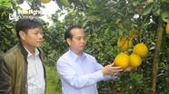 Thanh Chương đẩy mạnh ứng dụng công nghệ trong sản xuất nông nghiệp