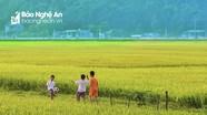 Ngắm đồng quê mơ mộng niềm vui ngày hè của tuổi thơ