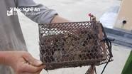 Xã biên giới Nghệ An xử lý đối tượng săn bắt chim trái phép