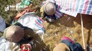 Nông dân miền núi tất bật vào mùa gặt lúa