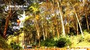 Sẽ xây trạm nghỉ ngắm cảnh và đường đi bộ, chụp ảnh dài 1,5km tại rừng săng lẻ ở Nghệ An