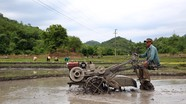 Người dân miền núi Nghệ An tất tả xuống đồng sau mưa