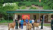 Bộ đội biên phòng trao bò cho hộ nghèo ở Tương Dương