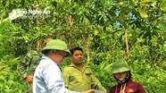 Nghệ An: Chi trả tiền dịch vụ môi trường rừng qua ngân hàng và giao dịch thanh toán điện tử