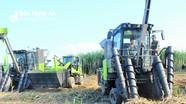 Công ty CP Mía đường Sông Lam trình diễn 'máy khủng' trồng và thu hoạch mía