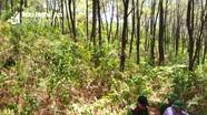 Nam thanh niên tử vong trong tư thế treo cổ trên đồi thông ở Nghệ  An