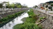 Cỏ cây phủ kín lòng kênh Bắc ở thành phố Vinh