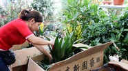Hoa Trung Quốc tràn ngập thị trường thành Vinh