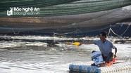 Nông dân Nghệ An mua thêm máy sục, căng lưới chống nắng cho tôm
