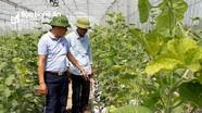 Nông dân Nghệ An trồng dưa lưới công nghệ cao lãi trăm triệu mỗi vụ