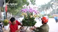 Quất bonsai 'gây sốt', hoa lan tràn ngập phố Vinh