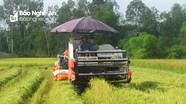 Nghệ An: Hỗ trợ phí bảo hiểm cho 8 huyện về cây lúa và 6 huyện về trâu, bò