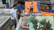 Nông dân Nghệ An nuôi ba ba, lươn sinh sản thu 200 triệu đồng/năm