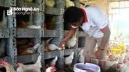 Sản phẩm OCOP ở Nghệ An đang 'loay hoay' tìm kiếm đầu ra