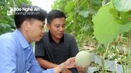 Nông dân Nghi Lộc phát triển nông nghiệp sạch mang lại hiệu quả kinh tế cao