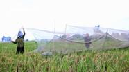 Độc đáo làng chuyên săn 'tôm bay' ở Nghệ An
