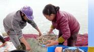 Nông dân Nghệ An tăng cường sản xuất thực phẩm, nông sản an toàn