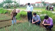Nghệ An: Đặt bẫy Pheromone diệt trừ sâu gây hại hành hoa