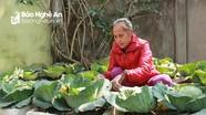 Rau hạ giá, người dân mua bắp cải cả cây về trồng dùng dần