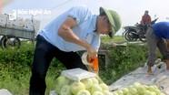 Dưa lê được giá, nông dân Diễn Châu phấn khởi