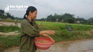 Thanh Chương bắt đầu gieo mạ sản xuất hè thu   