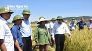 Chủ tịch UBND tỉnh động viên nông dân sản xuất hè thu thắng lợi