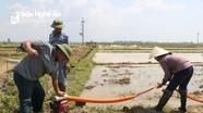 Nông dân Quỳnh Lưu huy động gần 3.000 máy bơm cấp nước cho sản xuất hè thu