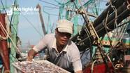 Ngư dân Quỳnh Lưu được mùa cá trỏng