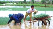 """Nông dân Nghệ An """"giải cứu"""" rau màu sau mưa lớn"""