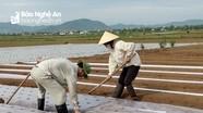 Nông dân Diễn Châu xuống đồng sản xuất vụ lạc đông sớm