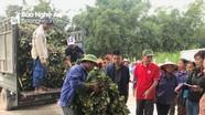 Nghĩa Đàn: Hỗ trợ giống khoai lang thương phẩm cho nông dân xóm thuộc diện 135
