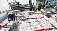 Ngư dân Nghệ An trúng đậm cá lượng trong giá rét