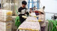 Ngư dân Hoàng Mai trúng đậm cá trỏng sau Tết