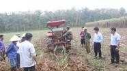 Công ty CP mía đường Sông Con: Đẩy mạnh ứng dụng cơ giới vào trồng, chăm sóc mía