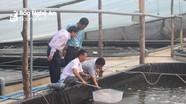 Quỳnh Lưu sẽ thả nuôi 500 - 600 triệu con tôm giống vụ 1