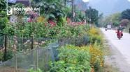 Con Cuông: Quyến rũ những con đường hoa đón mùa du lịch
