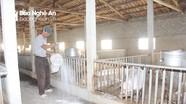 Quỳnh Lưu nhắc nhở một số xã còn lơ là trong chống dịch tả lợn châu Phi