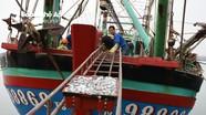 Ngư dân Hoàng Mai trúng đậm cá đốm
