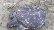 Nghệ An thả cá thể rùa thuộc loài quý hiếm trong sách đỏ Việt Nam về biển