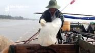 Ngư dân Diễn Châu được mùa sứa, cá trích