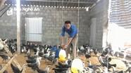 Thành công bước đầu của mô hình nuôi gà Ai Cập lấy trứng